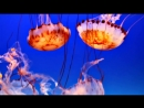 Shpongle_-_How_the_Jellyfish_Jumped_Up_the_Mountain__Music_Video_