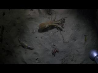 Красный осьминог против синего краба: кто победит?