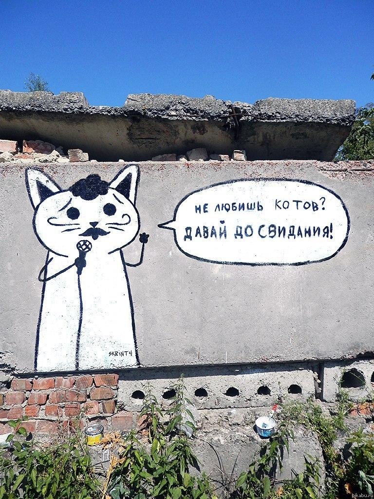 Порно с котами новости o зашел машина