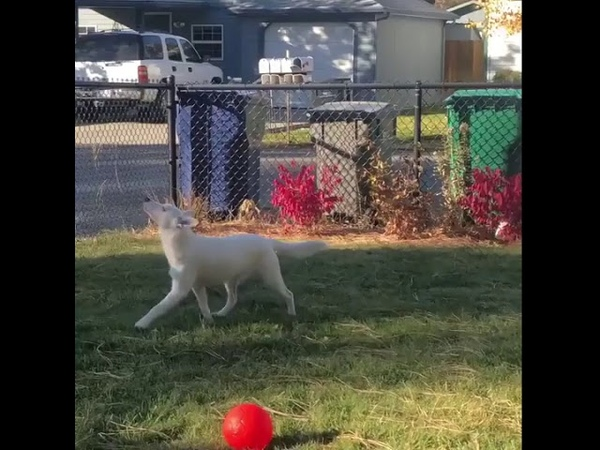 Blind and Deaf Puppy Recognizes Owner When He Comes Home - 1008139