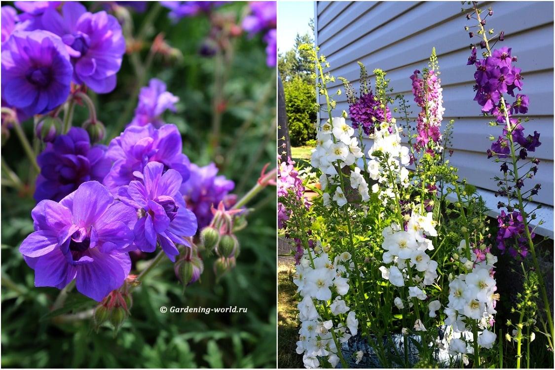 Правила создания цветника: многолетние цветущие растения для цветника