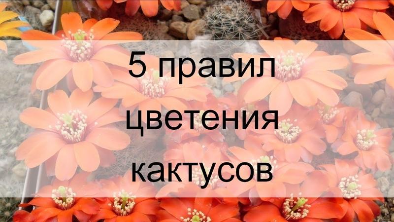 Как ухаживать за кактусами, чтобы они зацвели. Игорь Пугач