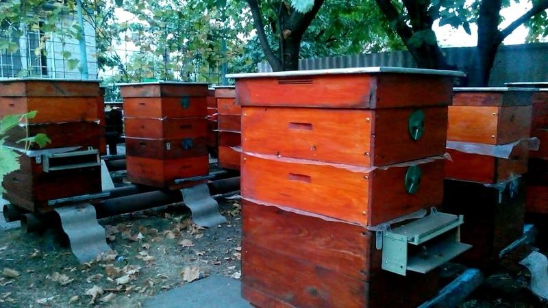 Пчеловодство. Подкормка пчёл в зиму сахарным сиропом с мёдом и КАС-81.