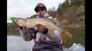 Три типажа мест для успешной ловли щук. Река Цна.
