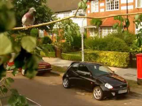 Şeytan Ford Kaput Kapağı ile Güvercin Kovuyor - Komik Videolar - Komik Reklam Videoları