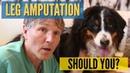 Ампутация ноги собаки стоит ли это делать Dog Leg Amputation Should You Do This
