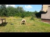 Как бросить курить: упражнение 50 берби в Тигродоме