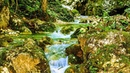 Relax 10 Min. Noise Forest Waterstream Sound Birds Singing/Шум ручья в лесу. Звуки воды и пение птиц
