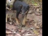 The dog was rescued from a GIANT python