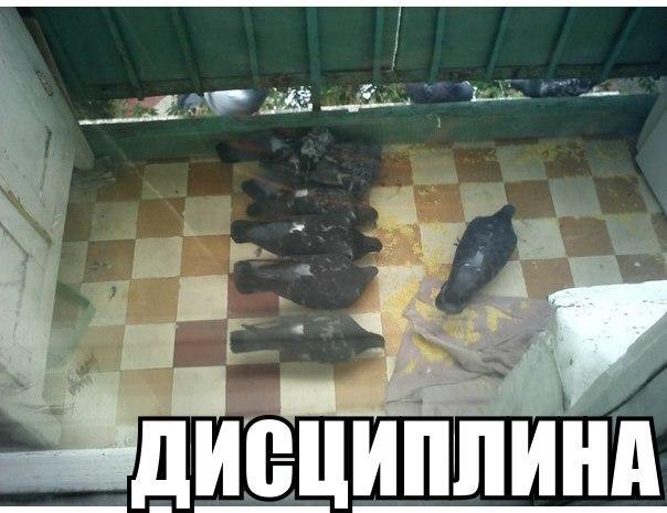 http://cs418126.vk.me/v418126490/77ba/oqZYVrYbGDc.jpg