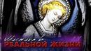 МИСТИКА В РЕАЛЬНОЙ ЖИЗНИ † PIRANIA SHOW