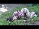 Последствия артобстрела в пригороде Донецка 12 июля 2014