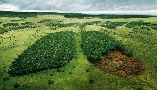 Социальная реклама на тему вырубки лесов