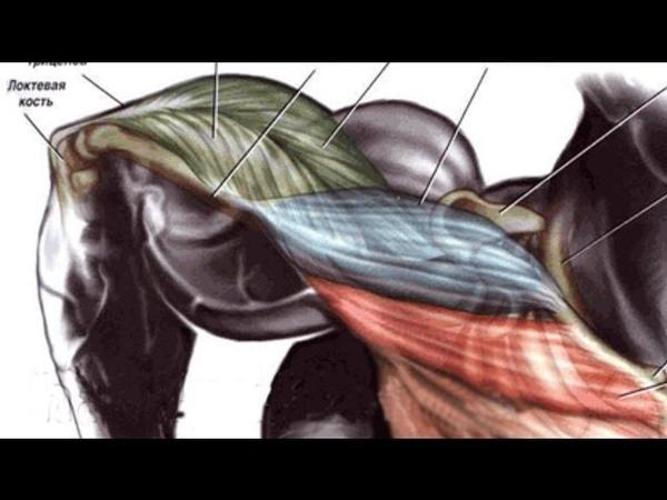 Надежно укрепляем мышцы рук