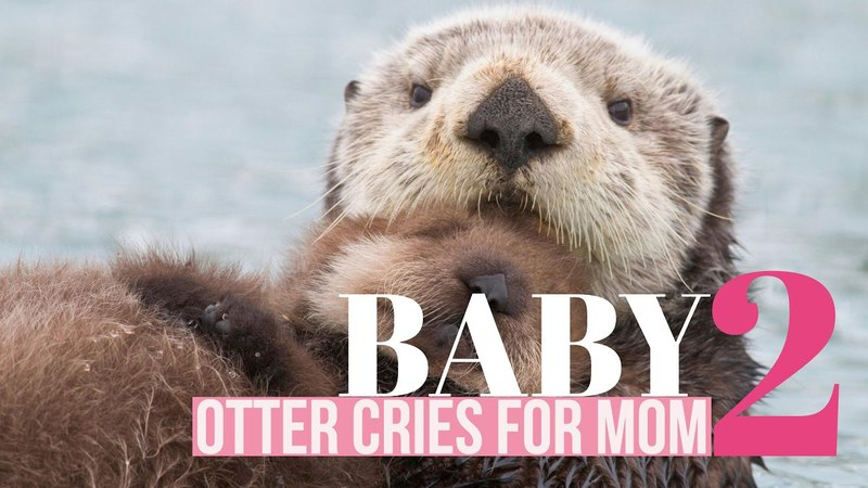 Baby Otter Cries for its Mother - Part 2