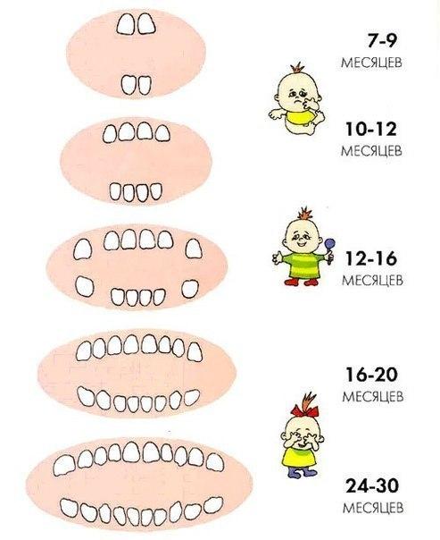 Кстати, о маленьких зубиках... Когда и в какой последовательности появляются молочные зубки, примерная схемка!