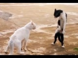Funny Cat Fails Compilation | FailWow