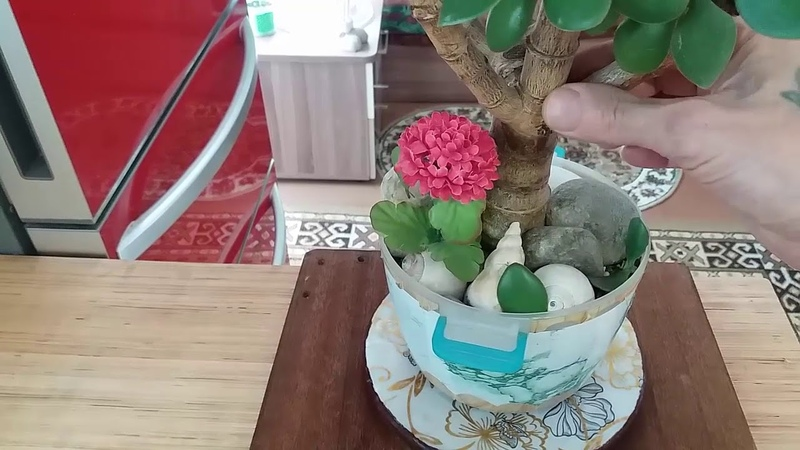 Формировка красулы (денежное дерево)