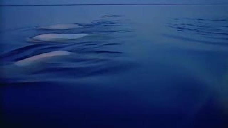 Ландшафты и природа мира Потрясающий фильм! HD Советую всем 1_low.mp4