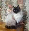 Сава Климова фото #16