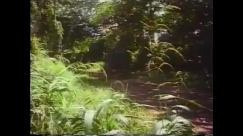 The Woman Hunt 1972 avi