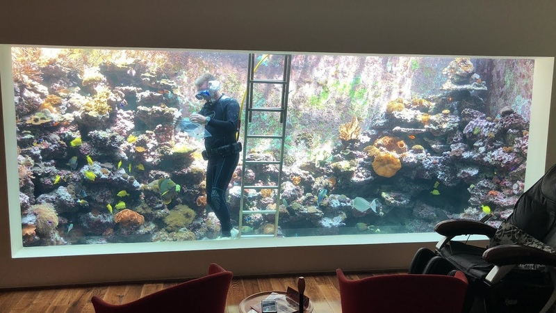 Eli's 30 000 Liter Reef Tank Populating a sea anemone with clown fish