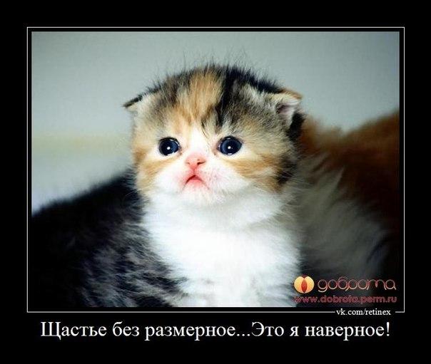 Самые милые котята в мире фото скачать бесплатно - 08