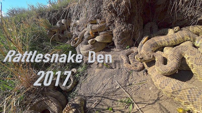 Rattlesnake Den in 4K