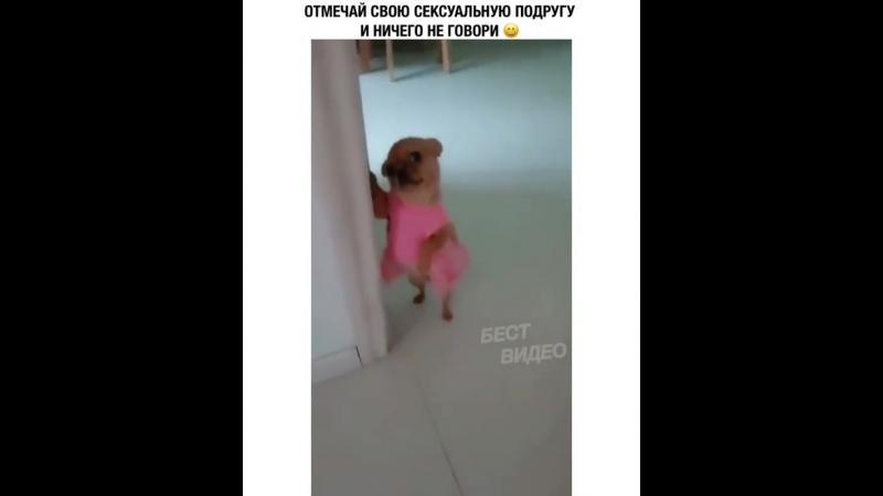 Эта секси-чихуахуа вылетая моя подруга!😂