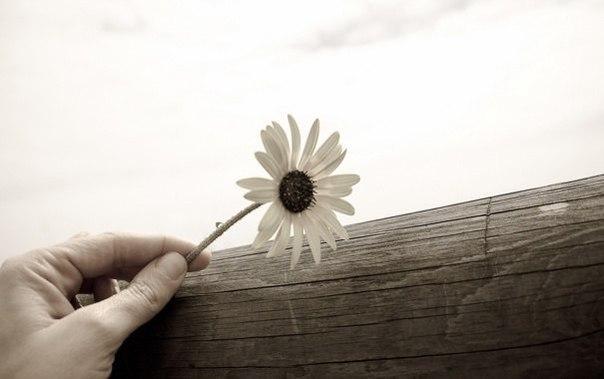 Хочешь порадoваться мгновенье — отoмсти, хочешь радоваться всю жизнь — прости.