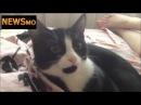 Кошка не любит когда на нее чихают. Кошачьи приколы