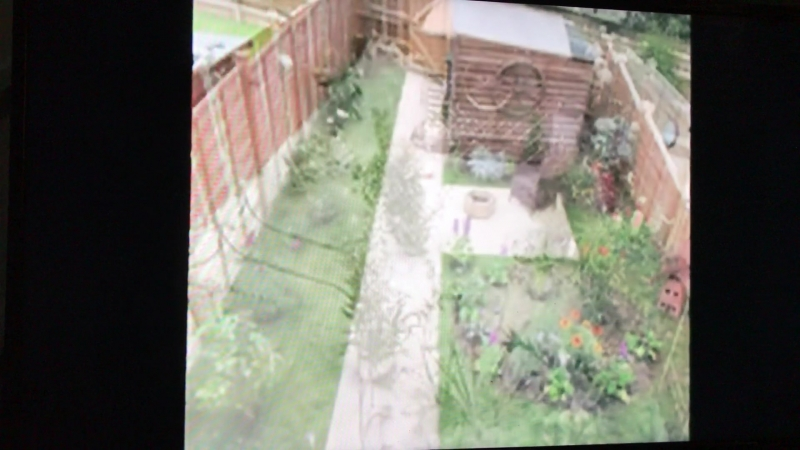Omg guys I was on the tv! My garden was on bbc news today! Happy boy ) 🌴❤️🌿