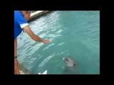 Подборка актерских сцен с убийством животных. Смотреть онлайн - Видео - bigmir)net