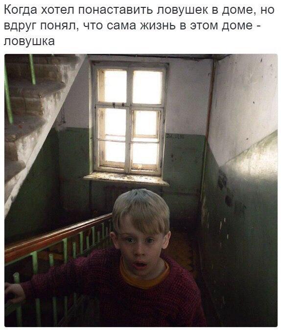 """Этологический """"юмор"""" ))"""