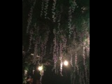 stacey_osullivan video
