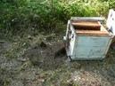 Приморский край О нашем пчеловодстве тайге кочевках И немного о медосборе Про переезды