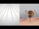 комар - биологическое оружие. заражает смертельными болезнями