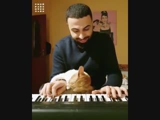 Турецкий пианист и котик.mp4
