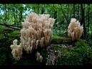 Первая грибная разведка после дождя. Июль. Грибы