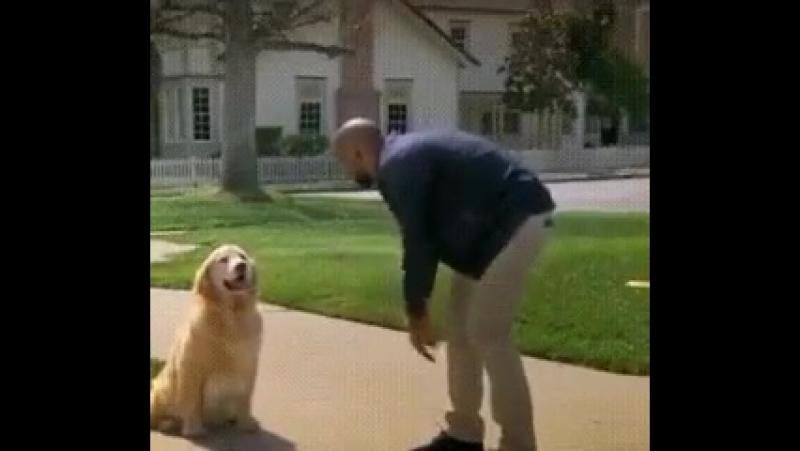 Не доверяйте собакам. Никогда! :)