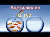 Ацетилхолин, IQ 160