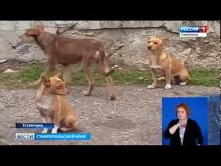 Чипы для бездомных. О бродячих собаках в Ессентуках заботятся волонтеры