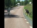 На дорогах северной Швеции
