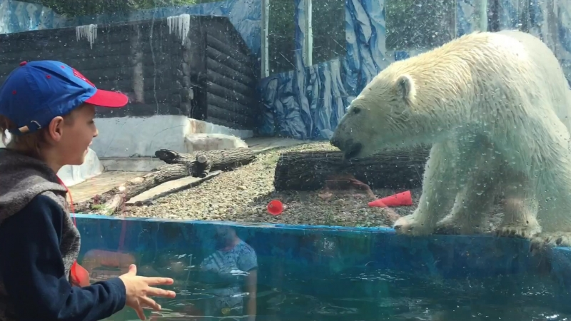 Жара не страшна для белого медведя Хабара