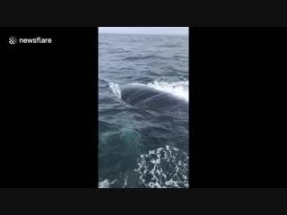 Fisherman cuts entangled humpback whale free of rope