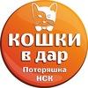"""КОШКИ В ДАР (Новосибирск) от """"Потеряшка-НСК"""""""