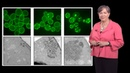 Susan Lindquist Whitehead MIT HHMI 1b Protein Folding in Neurodegenerative Disease