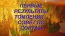 ДНЕВНИК ТАБАКОВОДА № 30 12 07 РЕЗУЛЬТАТЫ ТОМЛЕНИЯ ПЕРВЫХ ЛОМОК