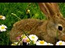 Little Bunny Foo Foo Song for Kids | Bunny Song | Rabbit Song | The Kiboomers