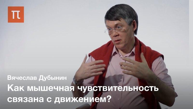 Мышечная чувствительность Вячеслав Дубынин